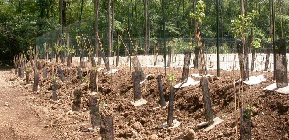 opere forestali bologna