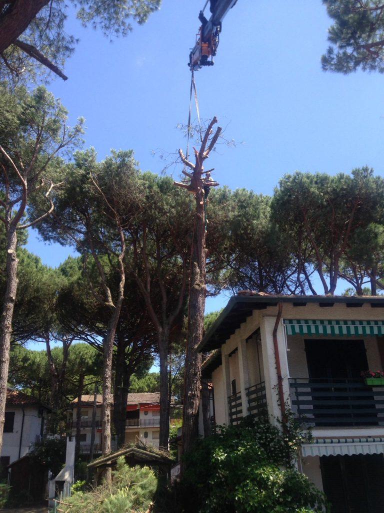 Potatura e abbattimento tree climbing Ferrara
